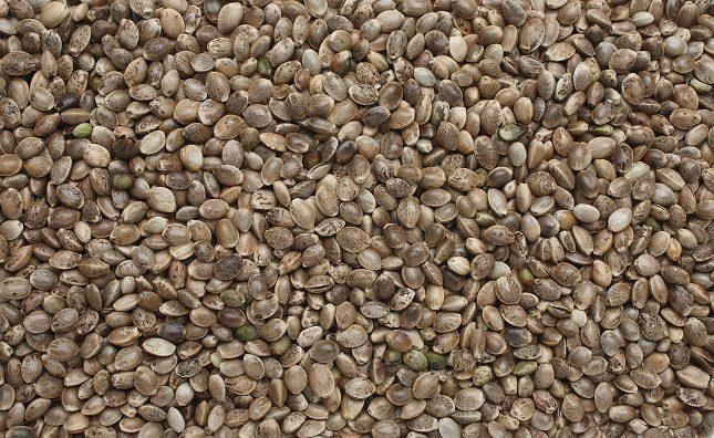 El alto contenido de fibra en las semillas de cáñamo hace que además de sentirte más saciado/a, puedas tener un mejor tránsito intestinal diario