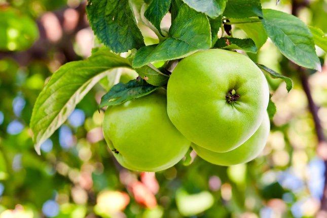 La manzana verde surge de la hibridación entre dos especies
