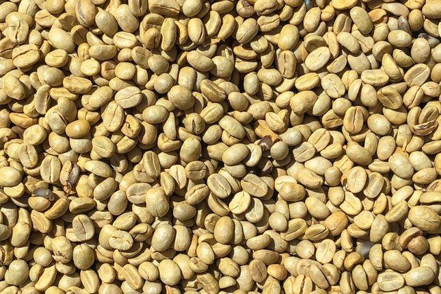 Llama la atención el color característico de esta variedad de café
