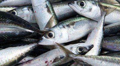 Diferencia entre el Pescado Blanco y el Pescado Azul